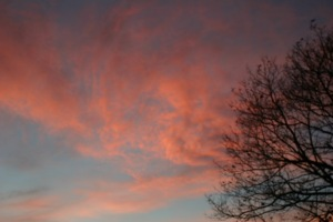 Lone Tree - Winter sunset