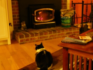 Cat before the hearth