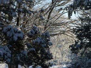 Snowy-Morning