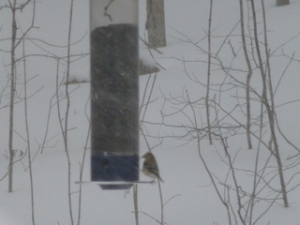 Bird-Feeder-In-Storm