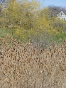 Spring-Marsh