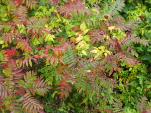 Early_Autumn_Color