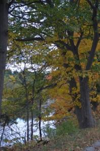 Autumn_Stream