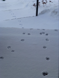 Paws_In_The_Snow