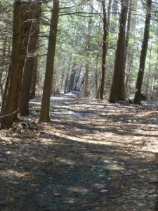 Woodland_Path
