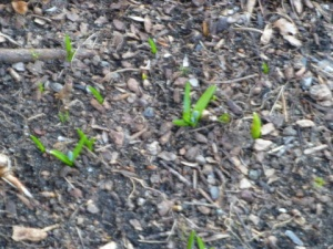Spring_Shoots