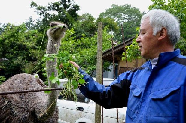 Meet Naoto Matsumura, The Guardian of Fukushima'sAnimals