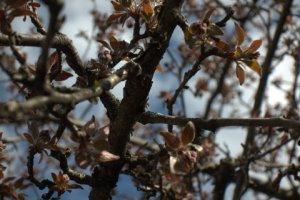 East:Spring_Blosoms