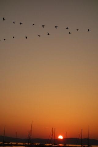 Autumn-Geese