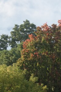 Early-Fall_Color