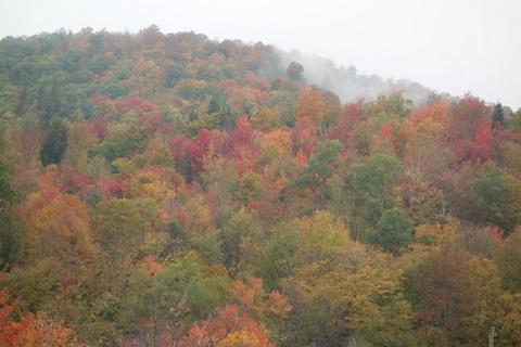 Autumn_woods
