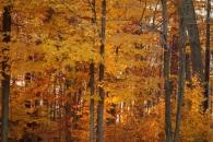Autumn_Wood