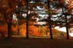 Autumn_Evening
