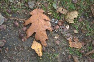 Late-Autumn