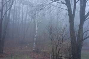 Late_Winter_Fog