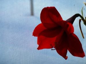 Flower_and_Snow