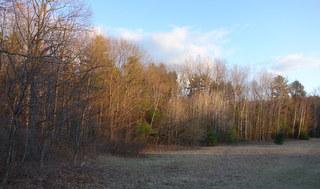 Spring_Woods