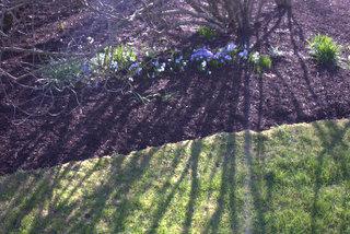 Spring_Shadows