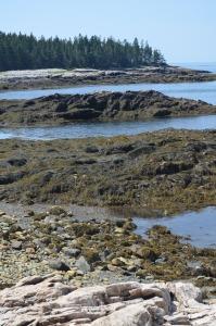 low_tide