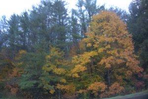 Wet_Autumn_Day