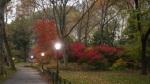 Fall_Twilight_Central_Park