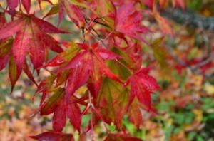 Last_Leaves