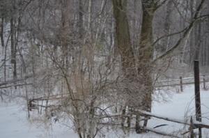 Last_snow