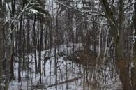 Snowy_woods